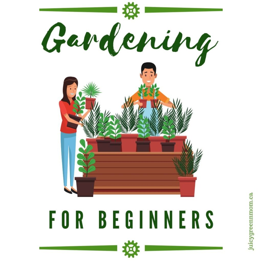 Gardening for beginners juicygreenmom