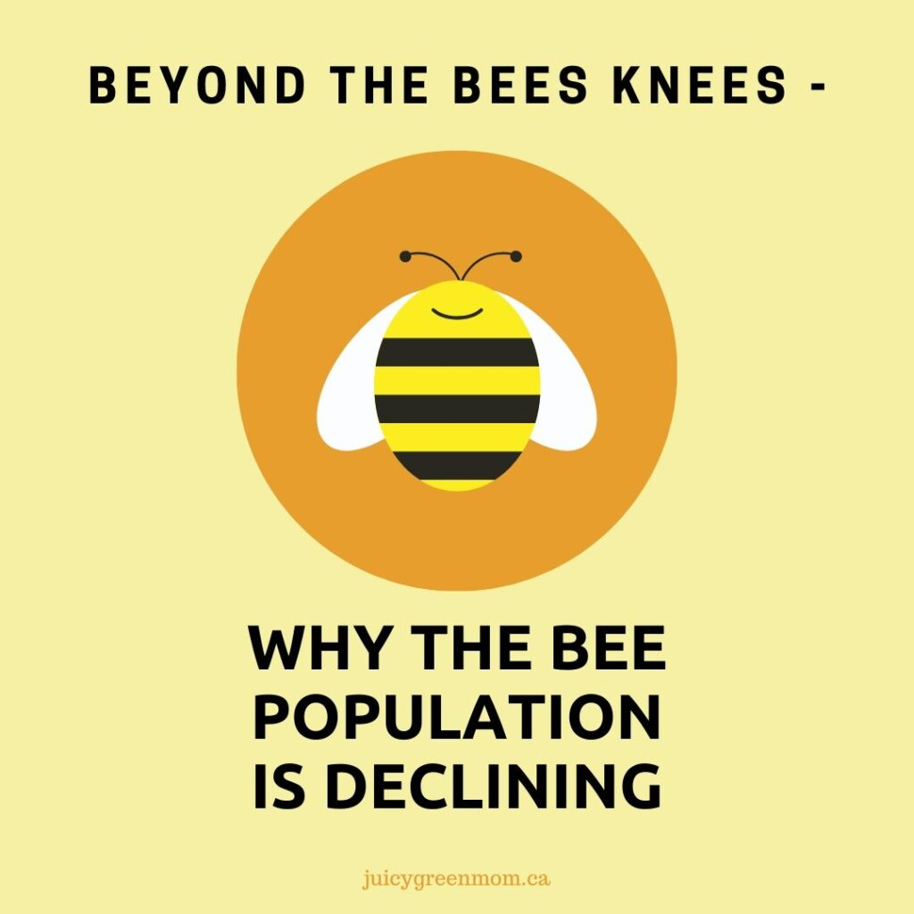 beyond the bees knees why the bee population is declining juicygreenmom IG