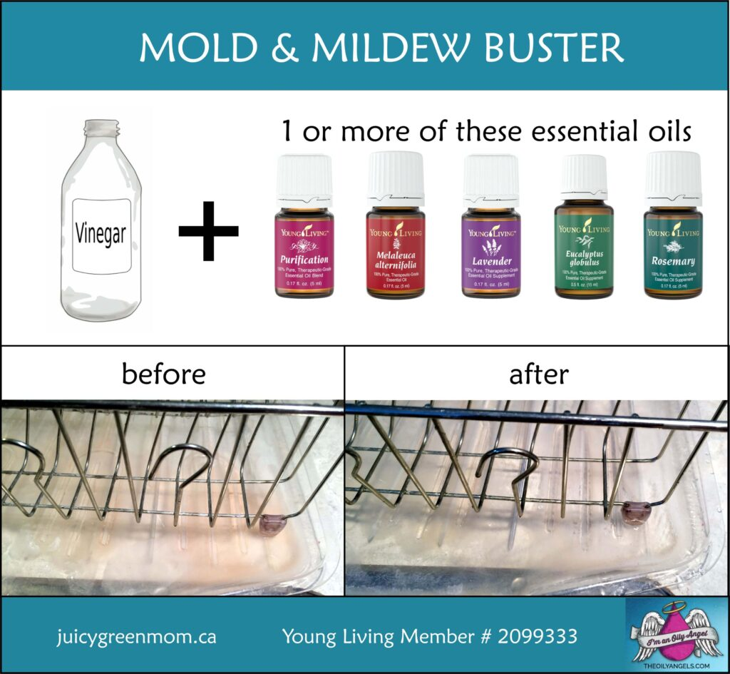 DIY mold and mildew buster with essential oils