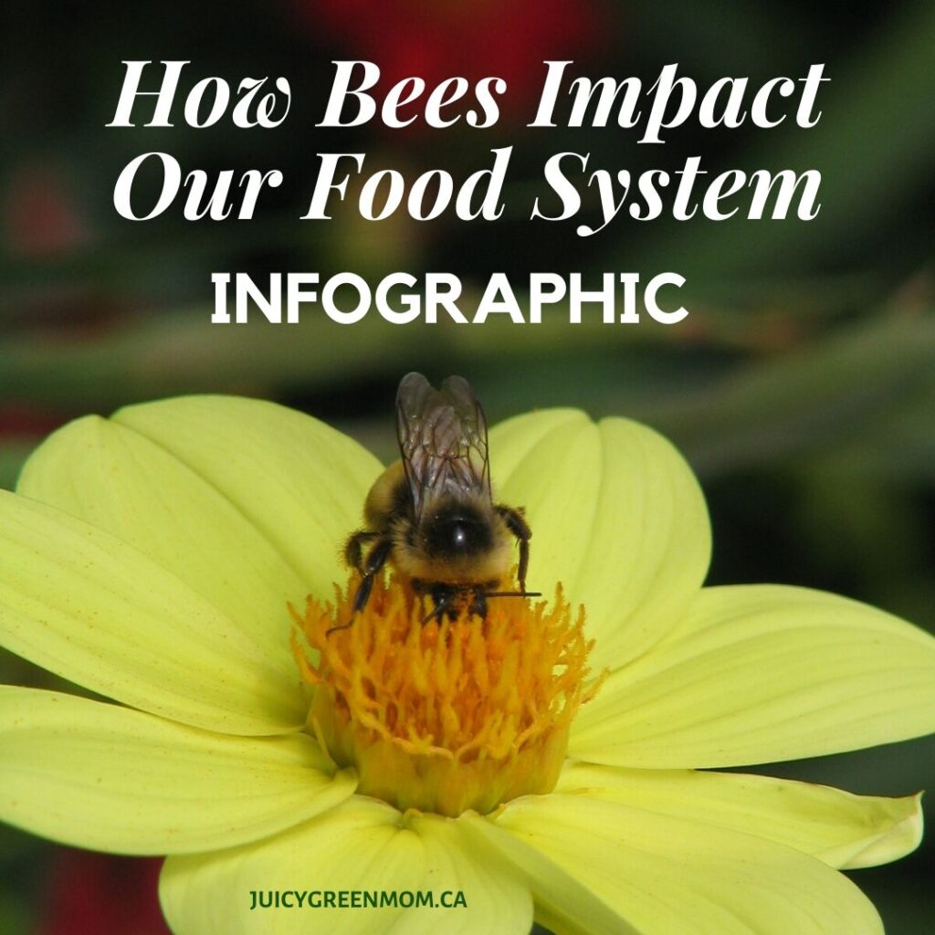 How Bees Impact Our Food System INFOGRAPHIC juicygreenmom