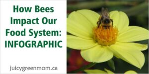 how bees impact our food system juicygreenmom landscape