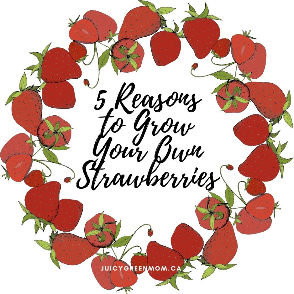 5 Reasons to Grow Your Own strawberries juicygreenmom