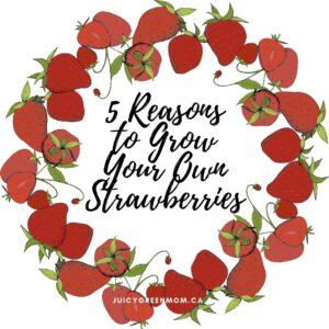 5 Reasons to Grow Your Own strawberries juicygreenmom