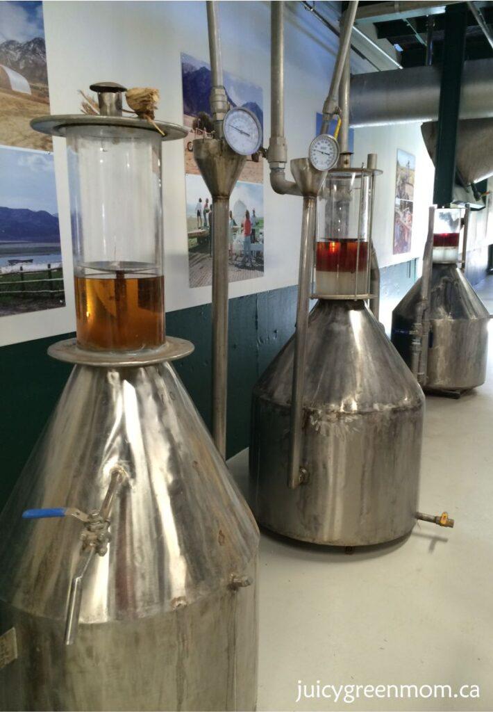 distillation juniper oil Young Living lavender farm in Utah juicygreenmom