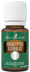 young living eucalyptus globulus essential oil natural health product