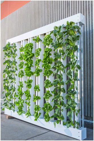 vertical garden set up