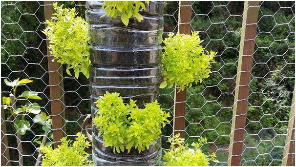 vertical garden with plants