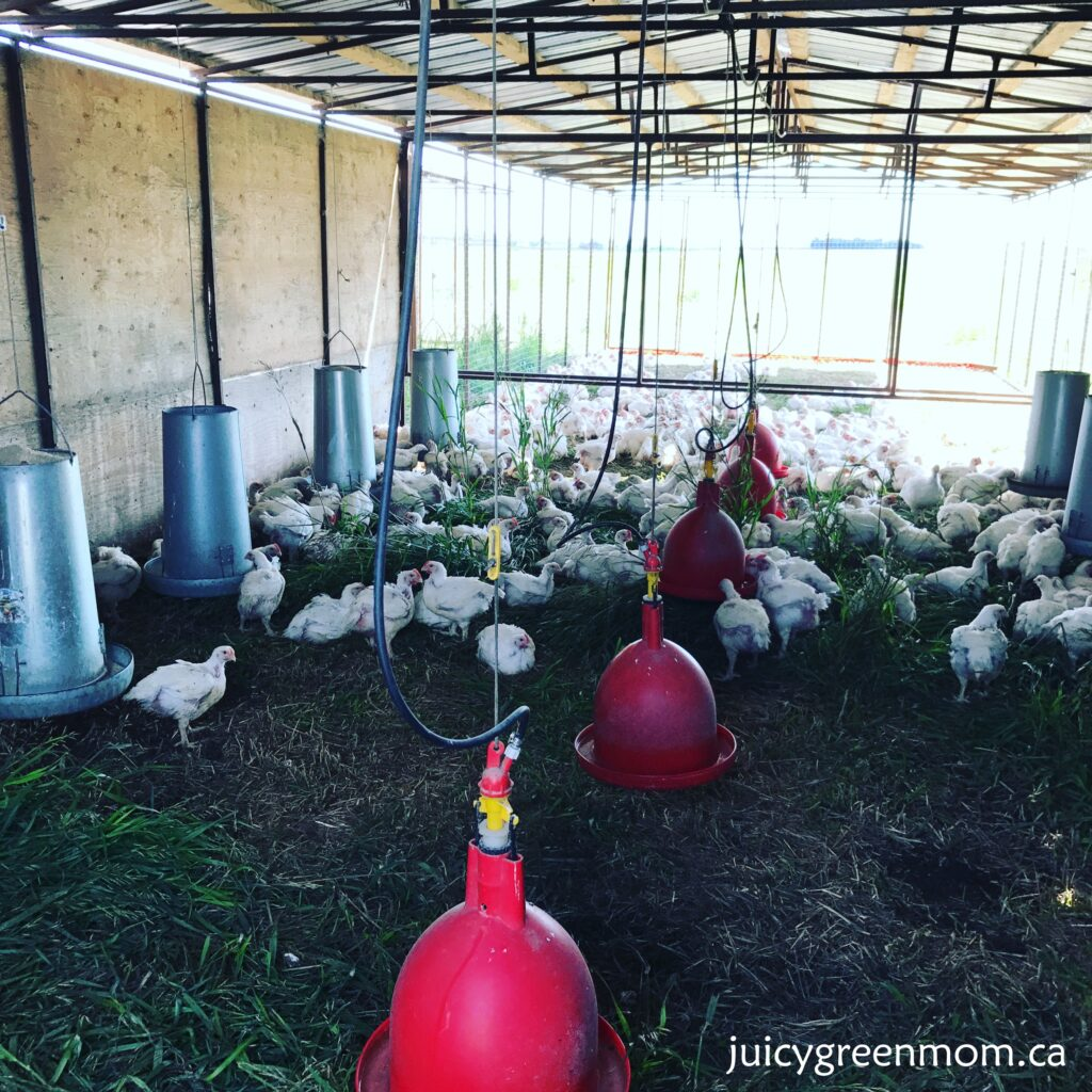 sunworks farm leaders in organic and humane farming part 1 chicken shelter juicygreenmom