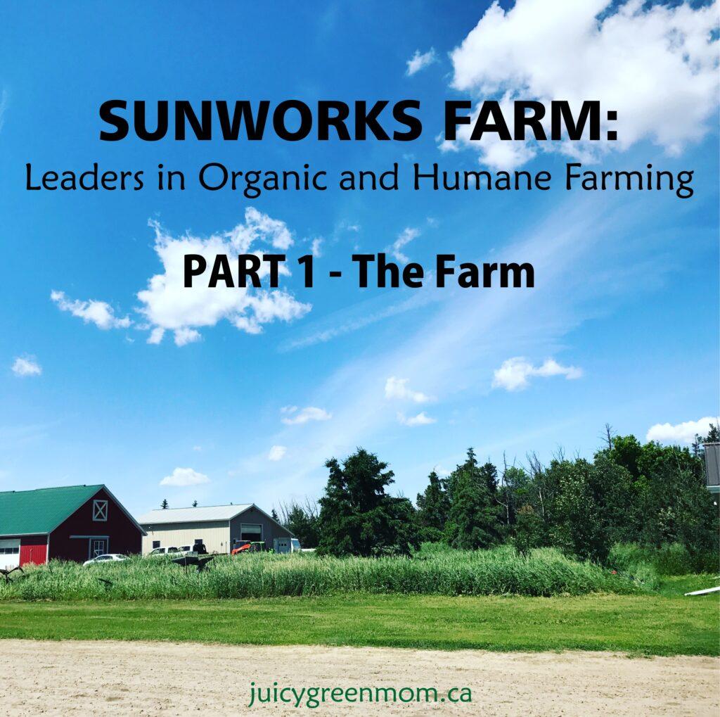 sunworks farm leaders in organic and humane farming part 1 the farm juicygreenmom