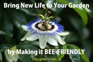 bring new life to your garden by making it bee friendly juicygreenmom