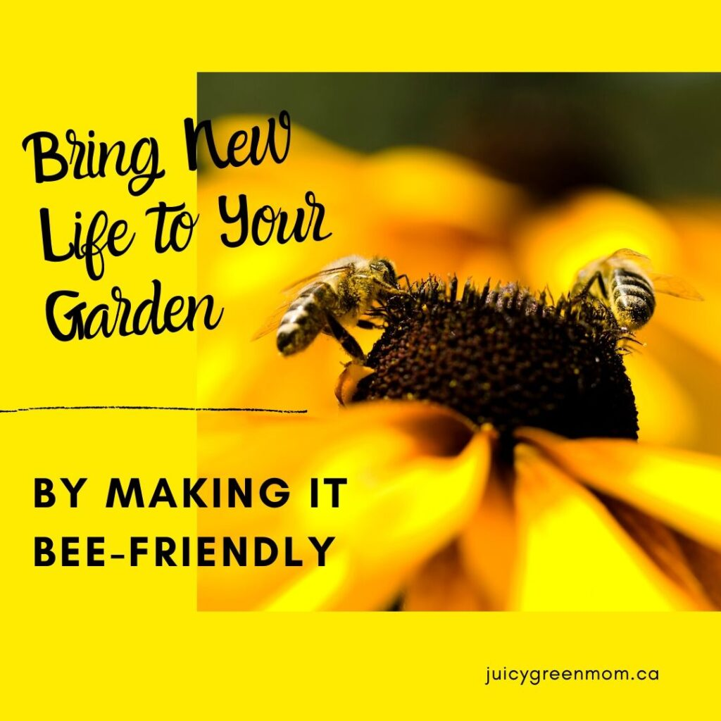 Bring New Life to Your Garden by making it bee-friendly juicygreenmom IG