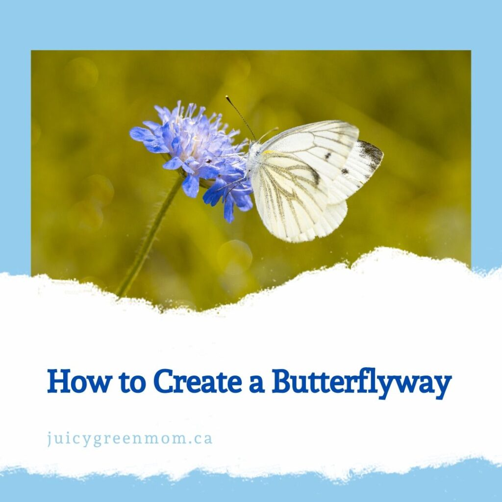 how to create a butterflyway juicygreenmom