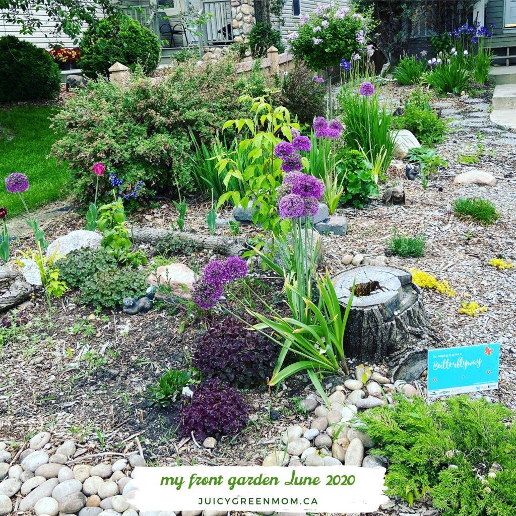 butterflyway front yard juicygreenmom