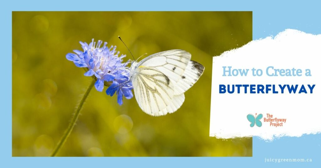 how to create a butterflyway main page graphic juicygreenmom
