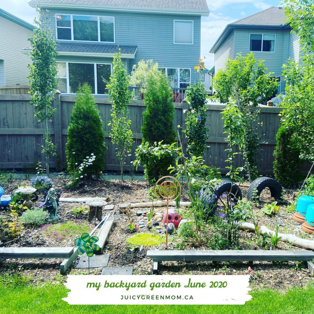 my backyard garden butterflyway juicygreenmom june 2020