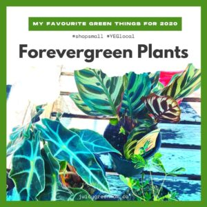 my favourite green things for 2020 forevergreen plants juicygreenmom