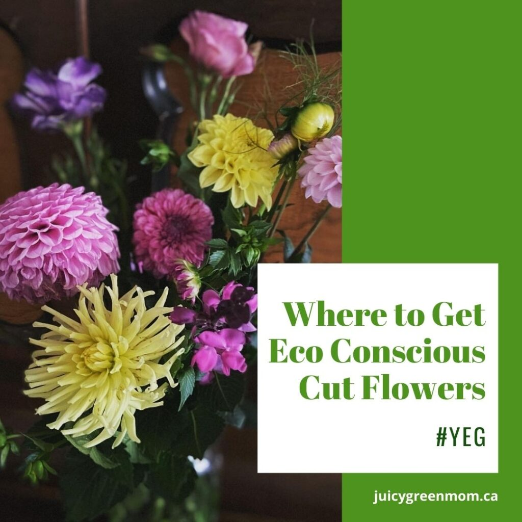 Where to Get Eco Conscious Cut Flowers #YEG juicygreenmom