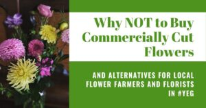 Why NOT to buy commercially cut flowers - and alternatives in #YEG