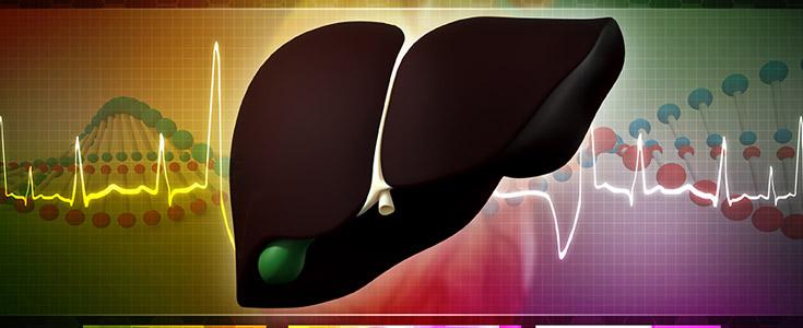liver and gallbladder