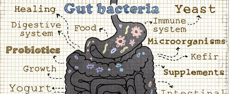gut bacteria image