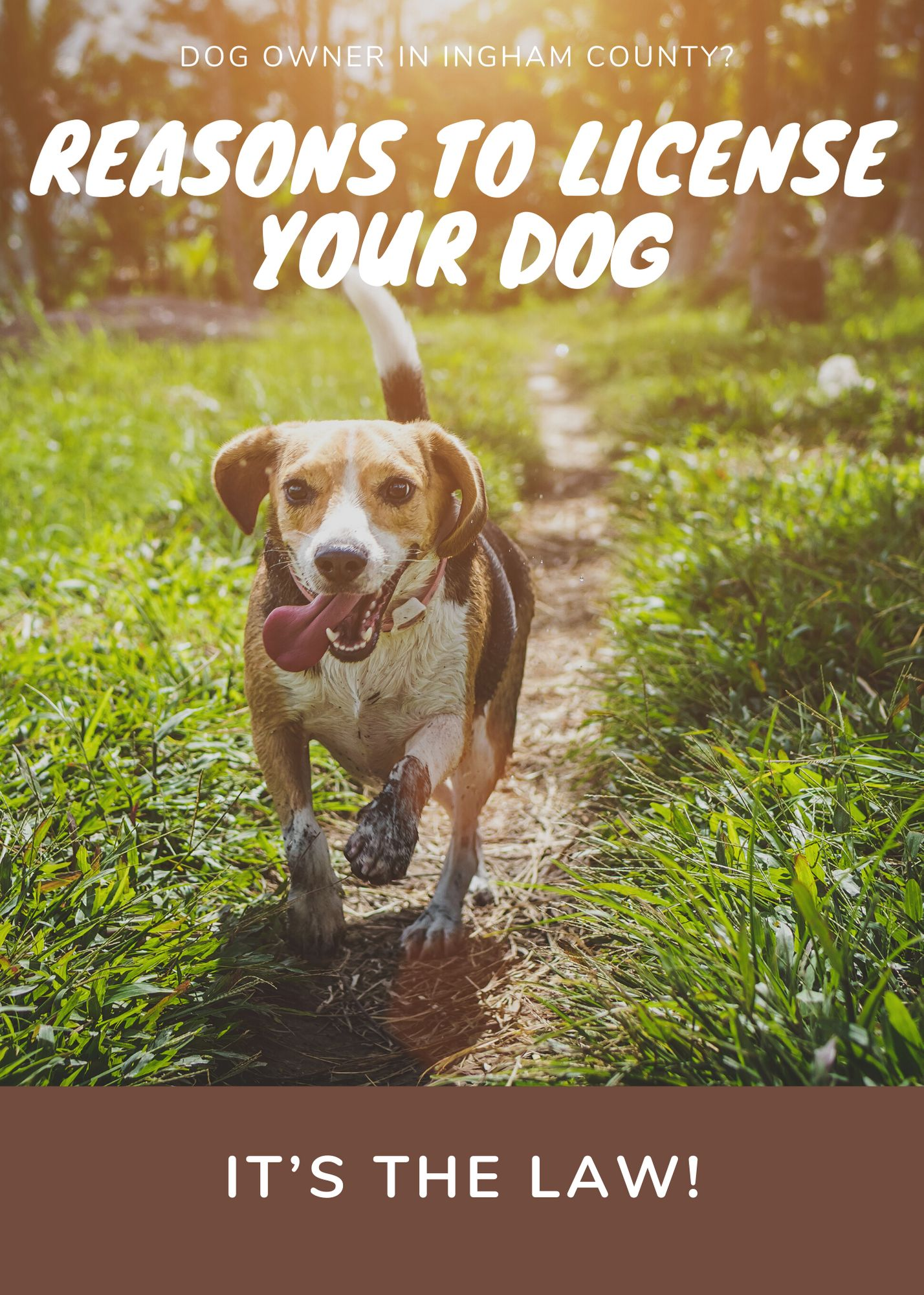 Ingham County Dog License Poster