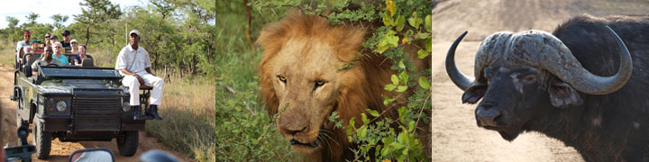 African Safari: Face to Face with Big Five near Kruger National Park, SAR