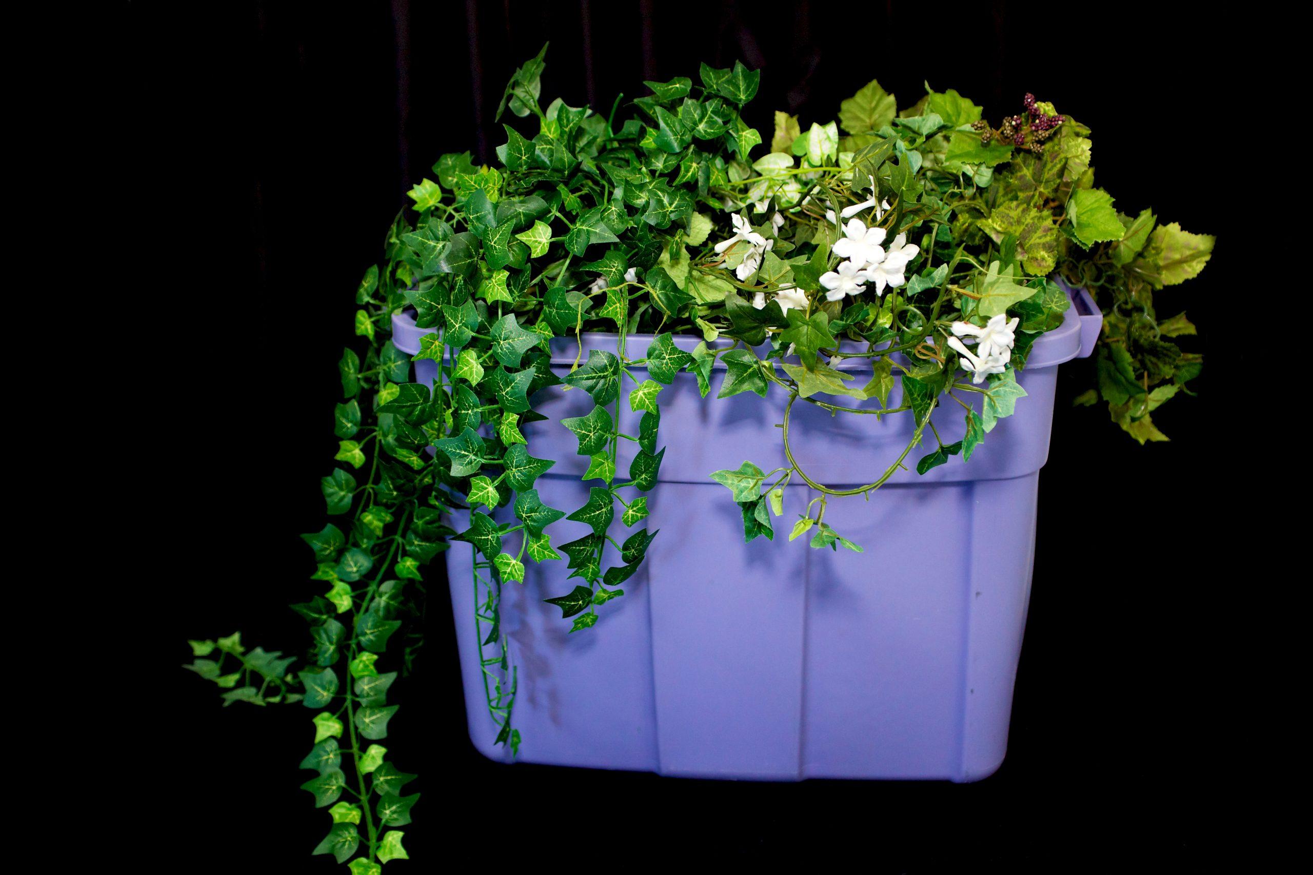 Bin of green ivy by Desiner Weddings Victoria