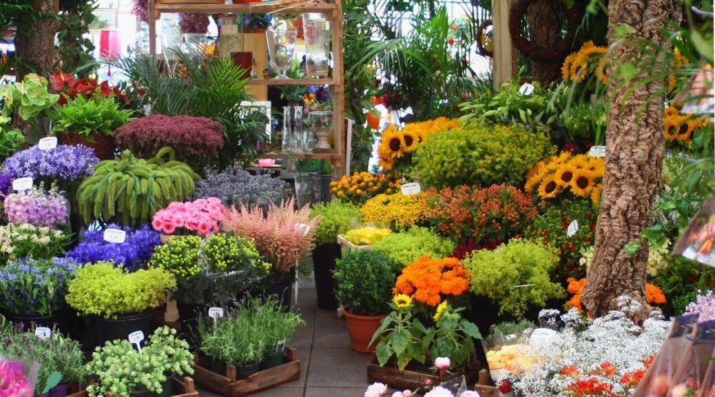 Beautiful plants in Sandpoint Idaho