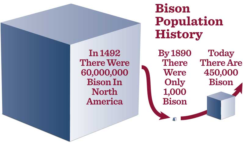 Bison Population History graphic