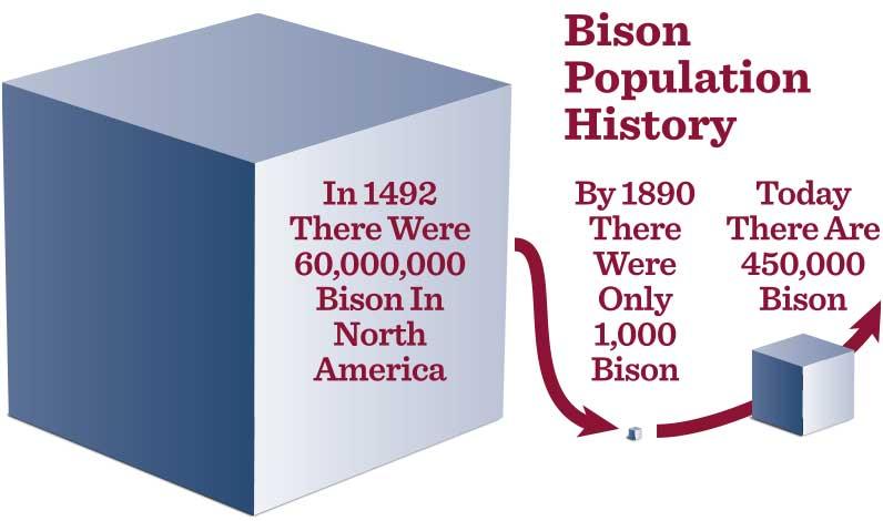 Bison Population History graphic