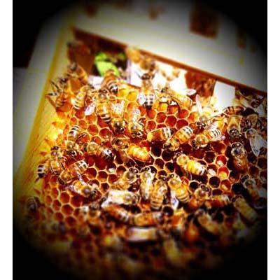 queen bee in Franklin TN