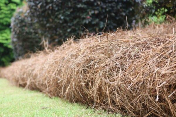Pine Straw Marietta