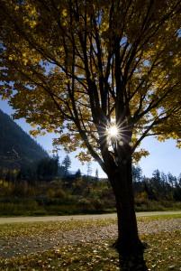 Memorial Beach Park 2, Chase, Shuswap, fall, landscape, Darren Robinson