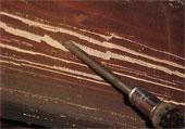 termite control pictures