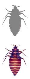 k-9 bed bug detection