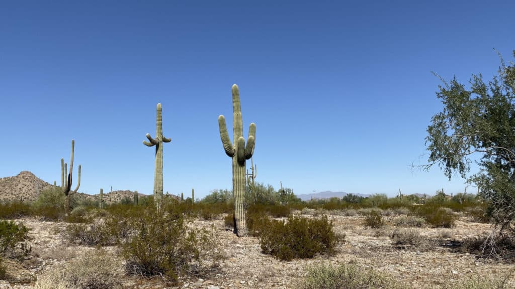 Land for Sale in Maricopa Arizona