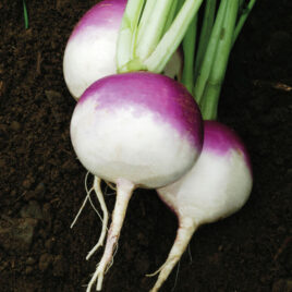 Purple-Top Turnips – per lb