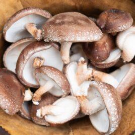 Shiitake Mushroom Quart