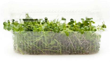 microgreens-clamshell