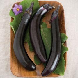 Seedling – Eggplant, Orient Express