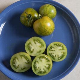 Seedling – Tomato, Green Zebra