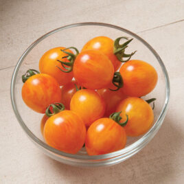 Seedling – Cherry Tomato, Sunrise Bumblebee