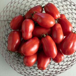 Seedling – Tomato, San Marzano