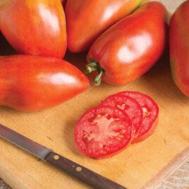 Seedling – Tomato, Blue Beech
