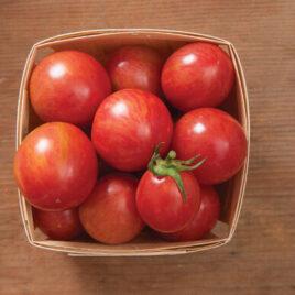 Seedling – Cherry Tomato, Pink Bumblebee