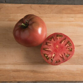Seedling – Tomato, Carbon