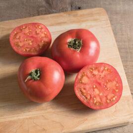 Seedling – Tomato, Damsel