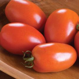 Seedling – Tomato, Amish Paste