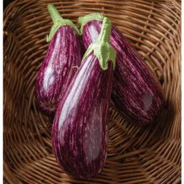 Seedling – Eggplant, Annina