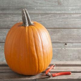 Seedling – Pumpkin, Howden